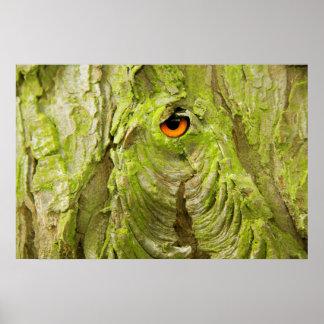 Oeil dans l'écorce d'arbre affiches