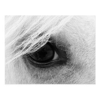 Oeil de cheval en noir et blanc carte postale