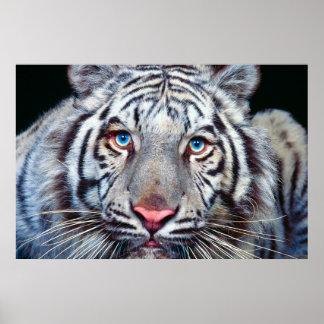 Oeil de l'affiche de tigre poster