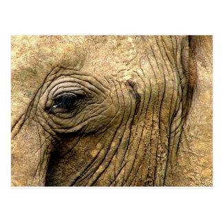 Oeil d'éléphant carte postale