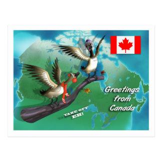 Oies canadiennes carte postale