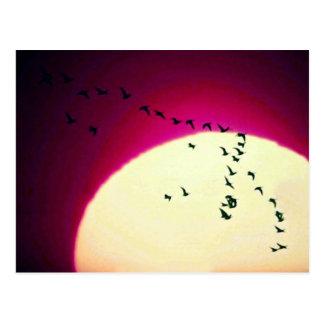 Oies du Canada silhouettées contre le coucher de Carte Postale
