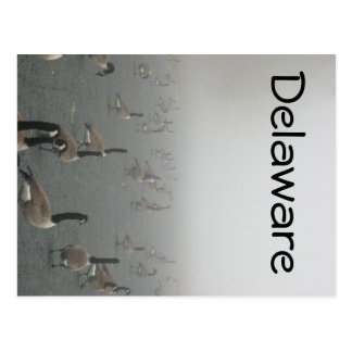 Oies en brouillard carte postale