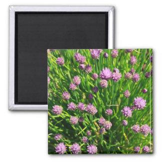 Oignon de salade fleurissant avec les fleurs magnet carré