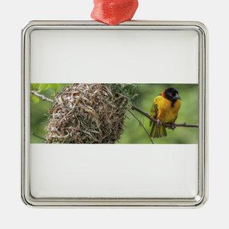 Oiseau africain et son nid d'herbe ornement carré argenté