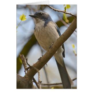 Oiseau assez bleu carte de vœux