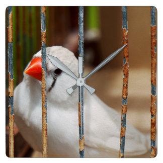 Oiseau blanc de pinson de zèbre dans la cage horloge carrée