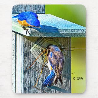 Oiseau bleu 020 nichant le tapis de souris