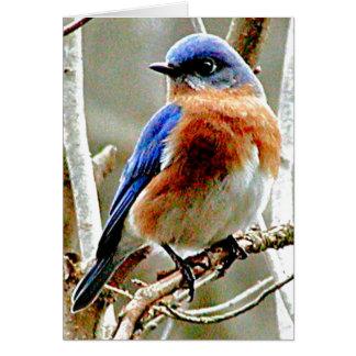 Oiseau bleu carte de vœux