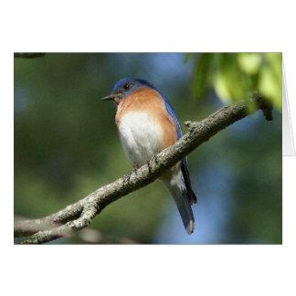 Oiseau bleu, carte de voeux