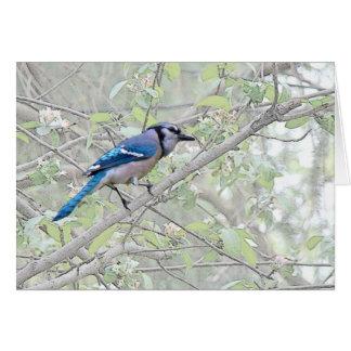 Oiseau chanteur de geai bleu carte de vœux
