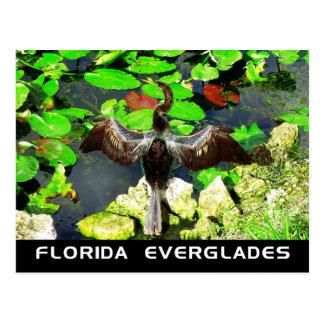 Oiseau d'Anhinga, parc national de marais, FL Carte Postale