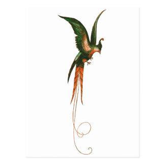 Oiseau d'art de cru de paradis cartes postales