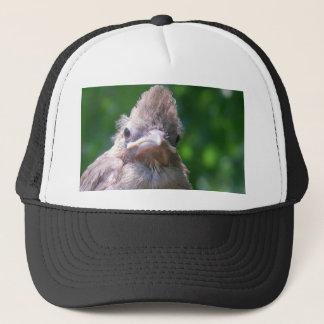 oiseau de bébé fâché casquette