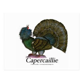 Oiseau de Capercaillie, fernandes élégants Cartes Postales