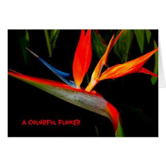 Oiseau de carte de note du paradis coloré
