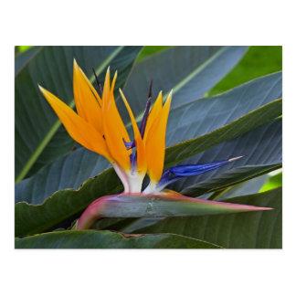 Oiseau de carte postale de paradis