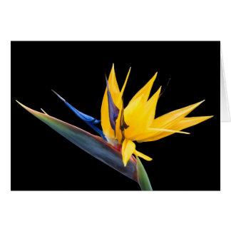 Oiseau de fleur de paradis et de carte tropicales