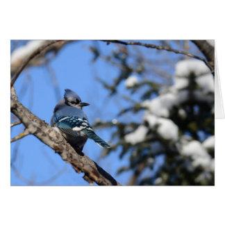 Oiseau de geai bleu dans la carte de voeux de