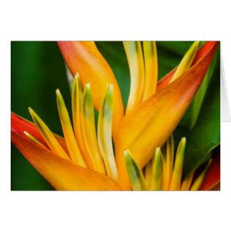 Oiseau de Heliconia de la photographie de fleur de Cartes De Vœux