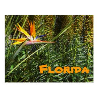 Oiseau de la Floride de carte postale de paradis