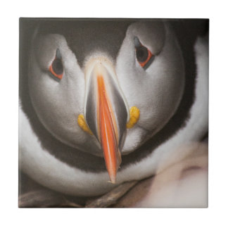 Oiseau de macareux petit carreau carré