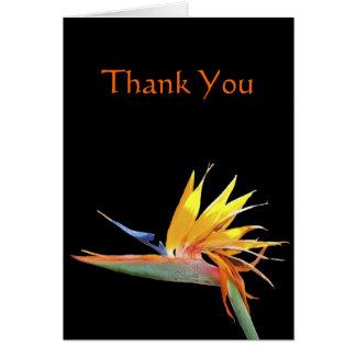 Oiseau de note de Merci de paradis Cartes De Vœux