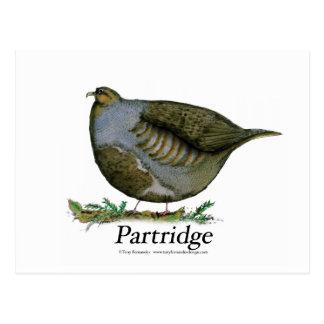 Oiseau de perdrix, fernandes élégants carte postale