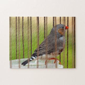 Oiseau de pinson de zèbre dans la cage puzzle