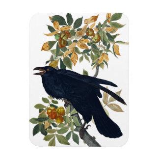 Oiseau de Raven Magnet Flexible