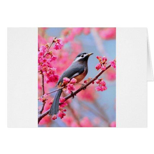 oiseau de ressort cartes de vœux