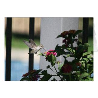 Oiseau de ronflement, carte vierge