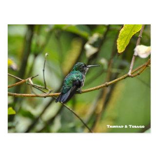 Oiseau de ronflement cartes postales