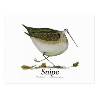 Oiseau de Snipe, fernandes élégants Cartes Postales