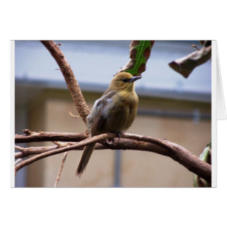 Oiseau de zoo de Londres Carte De Vœux