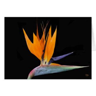 Oiseau des cartes de voeux de paradis