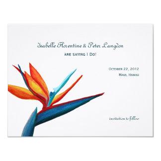 Oiseau des économies d'aquarelle de paradis la carton d'invitation 10,79 cm x 13,97 cm