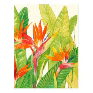 Oiseau des fleurs | du paradis tropical carte postale