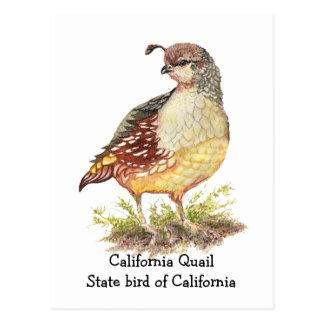 Oiseau d'état de cailles de Californie d'aquarelle Carte Postale