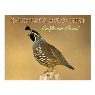Oiseau d'état de la Californie - caille de Carte Postale