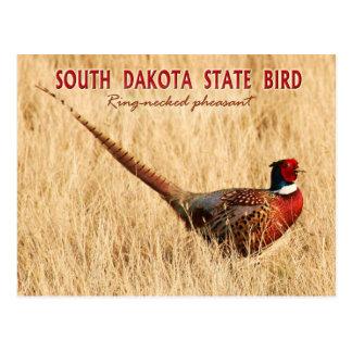 Oiseau d'état du Dakota du Sud : faisan Carte Postale