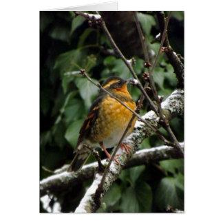 Oiseau d'hiver cartes de vœux