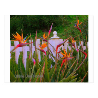 Oiseau du paradis 3 carte postale