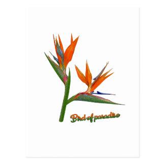 Oiseau du paradis carte postale