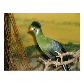 Oiseau du paradis cartes postales