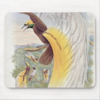 Oiseau du paradis, des 'oiseaux de New Guinea Tapis De Souris