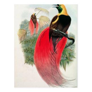 Oiseau du paradis, gravé par T. Walter Cartes Postales