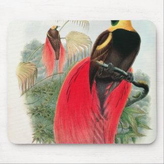 Oiseau du paradis, gravé par T. Walter Tapis De Souris