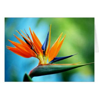 Oiseau du paradis I Carte De Vœux