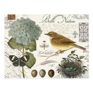 oiseau et nid français vintages modernes carte postale